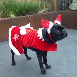 mops_molly_weihnachten_03
