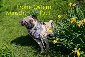 mops_paul-von-frentrop_43
